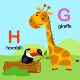 Alphabet Letter G-giraffe,H-hornbill, Royalty Free Stock Image
