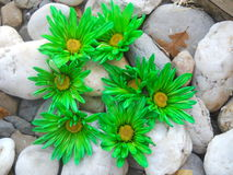 Alphabet Letter G Green Flowers Royalty Free Stock Photos