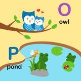 Alphabet Letter O-owl,P-pond, illustration Royalty Free Stock Image