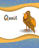 Alphabet letter Q and quail. With a colored background Royalty Free Stock Photo