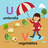 Alphabet Letter U-umbrella,V-vegetables,illustration Stock Image