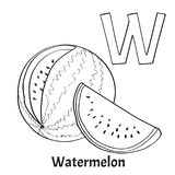 Alphabet letter W, coloring page. Watermelon. Vector alphabet letter W for children education with funny cartoon watermelon. Isolated. Learn to read. Coloring Stock Image