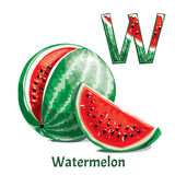 Alphabet letter W. Watermelon. Vector alphabet letter W for children education with funny cartoon watermelon. Isolated. Learn to read Royalty Free Stock Images