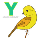 Alphabet letter Y yellowhammer bird Royalty Free Stock Images