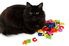 Alphabet letters and black cat on white background. Stock Photo