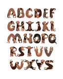 Alphabet letters in shape of dogs. Alphabet letters in shape of Dachshund dogs vector illustration