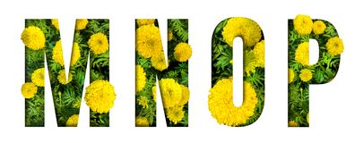 Alphabet M, N, O, P made from marigold flower font isolated on white background. Beautiful character concept. Font royalty free stock images