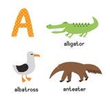 Alphabet mignon de zoo dans le vecteur Une lettre Animaux drôles de bande dessinée : Albatros, alligator, fourmilier Images libres de droits