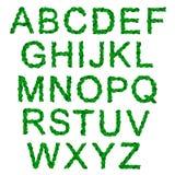 Alphabet mit grünen heiligen Blättern für Weihnachten Stockbilder