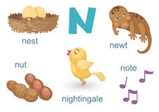 Alphabet N. Illustration of alphabet n set Stock Image