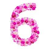 Alphabet Nr. sechs von den Orchideenblumen lokalisiert auf Weiß Lizenzfreie Stockfotografie