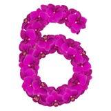 Alphabet Nr. sechs von den Orchideenblumen lokalisiert auf weißem Hintergrund Stockfotografie