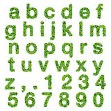 Alphabet with numbers made from green leaves isolated on white background. 3D render. Stock Photo