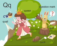 Alphabet.Q. Letter quail queen quill quoll question mark Royalty Free Stock Photos