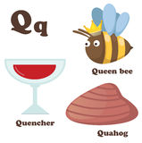 Alphabet Q letter.Quahog,Queen bee,Quencher Royalty Free Stock Image