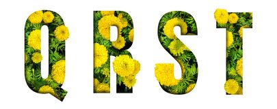 Alphabet Q, R, S, T made from marigold flower font isolated on white background. Beautiful character concept. Font stock image