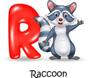 Alphabet R with raccoon. Illustration of Alphabet R with raccoon Royalty Free Stock Photos