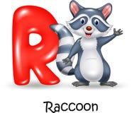 Alphabet R with raccoon vector illustration