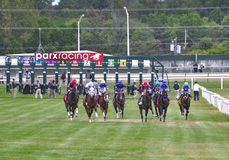 The Alphabet Soup Stakes. Turf racing from the top of the stretch. Head on view of a large field of racehorses turning into the stretch on the turf at Parx for royalty free stock image