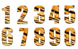 Alphabet in style of a tiger Royalty Free Stock Photography