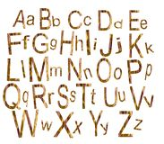 The alphabet. Surrounded by white background vector illustration