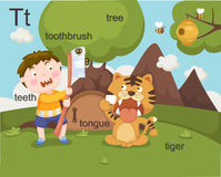 Alphabet.T. Letter teeth toothbrush tree tongue tiger Royalty Free Stock Photos