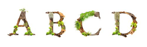 Alphabet wood and plants texture A B C D isolated on white backgroud. royalty free stock images