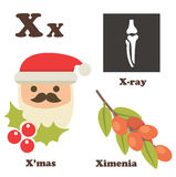 Alphabet X letter. Xmas,Ximenia,X-ray Royalty Free Stock Images