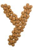 Alphabet Y de noix de gingembre Images stock