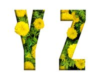Alphabet Y, Z made from marigold flower font isolated on white background. Beautiful character concept. Font stock photography