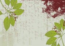 Alphabetic plant background Royalty Free Stock Photo
