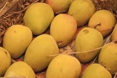 alphonso hindusa mango Fotografia Royalty Free