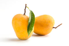 Alphonso Mango. King of fruits; Alphonso yellow Mango fruit duo with stems and green leaf isolated on white background stock photo