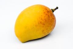 Alphonso Mango (Mangifera indica) Stock Image