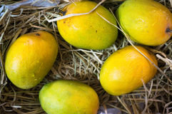 Alphonso mangoes packed in straw India Royalty Free Stock Image