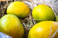 Alphonso mangoes packed in straw India Royalty Free Stock Images