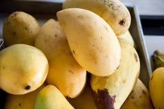 Alphonso Mangos maduro - rei dos frutos Fotografia de Stock Royalty Free