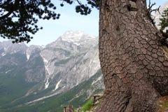 Alpi albanesi Immagine Stock