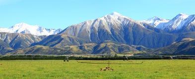 Alpi alpine in Nuova Zelanda Immagini Stock Libere da Diritti