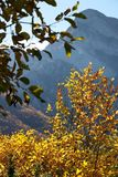Alpi Apuane, Massa Carrara, Toskana, Italien Buche verlässt im autu lizenzfreies stockbild