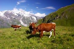Alpi in Austria, Europa Fotografie Stock