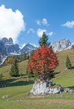Alpi austriache vicino a Filzmoos, Austria Immagine Stock
