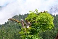Alpi bavaresi con gli alberi Fotografia Stock Libera da Diritti
