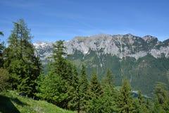 Alpi bavaresi con gli alberi Immagini Stock Libere da Diritti