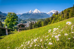 Alpi bavaresi con i bei fiori e Watzmann nella primavera, Baviera, Germania Fotografia Stock Libera da Diritti