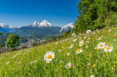 Alpi bavaresi con i bei fiori e Watzmann nella primavera, terra di Berchtesgadener, Germania Fotografia Stock Libera da Diritti