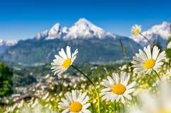 Alpi bavaresi con i bei fiori e Watzmann in primavera, Germania Fotografia Stock Libera da Diritti