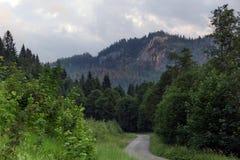 Alpi bavaresi con il Mountain View e prati nel Allgau Immagine Stock