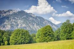 Alpi con gli alberi e l'erba Fotografia Stock Libera da Diritti