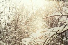 Alpi dei rami di albero di paesaggio di inverno, elaborazione trasversale Immagini Stock Libere da Diritti